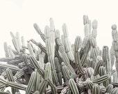 Cactus Wall Art, Modern Desert Artwork, Botanical Print, Minimalist Nature Photography, Oversized Photograph, Grey Living Room Art