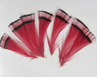 6 Golden Pheasant Tippet Feathers - Dyed Red