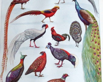 Beautiful Book Plate of Pheasants, Peacocks / 1946