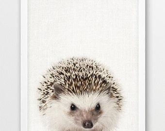 Hedgehog Print, Animals Print, Woodlands Animal, Nursery Wall Art, Hedgehog Photo, Cute Animal, Kids Room Print, Nursery Decor, Printable