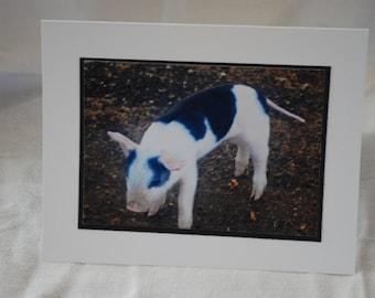 photo card, piglet photograph