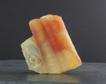 BAmboo fosil B6030