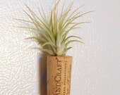 Air Plant Magnet / FREE SHIPPING
