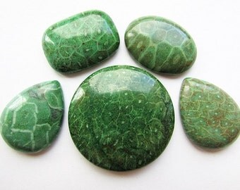 5 Green Coral Cabochons Fossil Coral Cabochon Different Shapes Cabochons Flat back Jewelry making Craft Supplies
