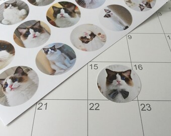 Planner stickers - A Brownie for every moment