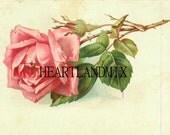 Single Rose Downloadable Art Graphic Image