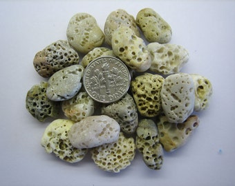 BEACH SEA STONES 15mm - 20mm White Cream Brown Grey Holes Fossils Slag 19 Genuine Surf Tumbled Natural Unaltered Bulk Greek Rocks   U 221e