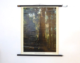 Vintage Brazilian Rainforest School Chart - Large Photograph of Tropical Rainforest - Saban Saaid Photograph