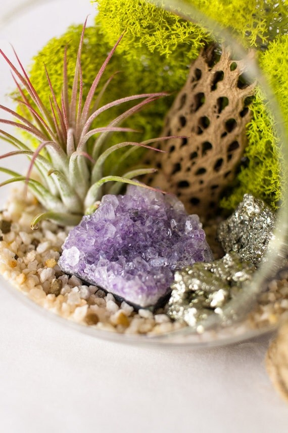 Terrarium Kit Amethyst Cluster with Pyrite Air Plant  || February Birthstone ||  Crystal Garden || Medium Round Hanging