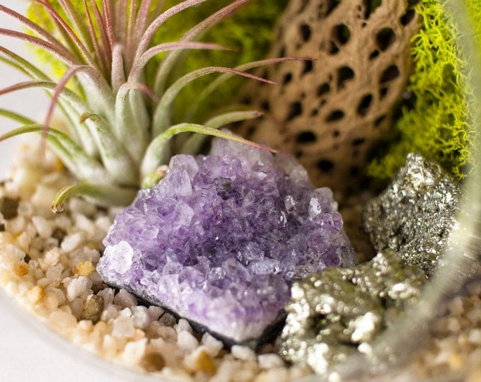 Featured listing image: Terrarium Kit Amethyst Cluster with Pyrite Air Plant  || February Birthstone ||  Crystal Garden || Medium Round Hanging