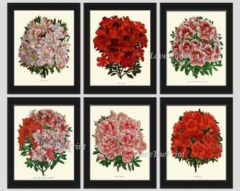 Antique Botanical Print Set of 6 Flowers Art Beautiful Large Azalea Plants Spring Summer Garden Nature Vintage Wall Home Decor