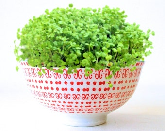 DIY Microgreens Garden Kit in Modern Coral and Turquoise Patterned Rice Bowl - Ceramic Planter Seeds Soil Mix