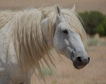 Gandalf in Oel ~ Wild Mustang Stallion ~ Utah ~ Wild Horses ~ Equine Art ~ Photography Art~ Horses Art