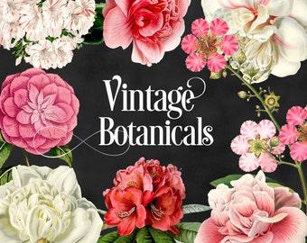 Vintage Botanicals   Roses Azalea Amaryllis    Clipart Instant Download