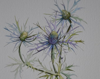 Thistle Sea Holly Botanical Portrait Print