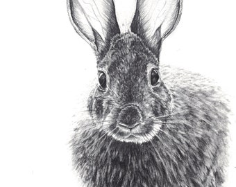 ORIGINAL ARTWORK - Cottontail the Rabbit