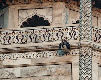 Lovebirds - Taj Mahal - 8x10 print - Fine Art - Wall Art - Inquire about Size & Frame Options