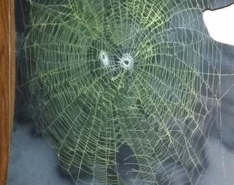Orb Weaver Spider Webs