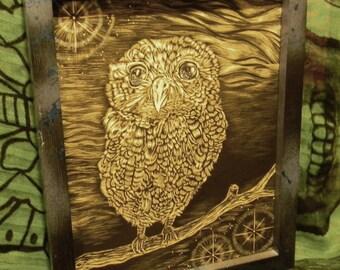 star eyed owl