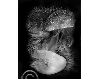 Sea Life #4, Inkjet print  7x9 image on 11x14 archival paper