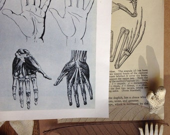 Study of the hand...