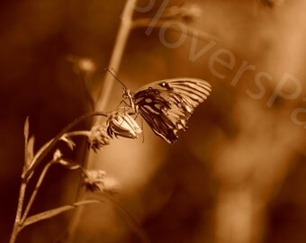 SALE Butterfly Photograph // Sepia Photo // Florida Nature Photography // Butterfly and Flower Print