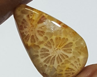 12 carat Natural Fossil Coral Cabochon Gemstone in Pear shape 20 x 14 mm for Ring making.LG217