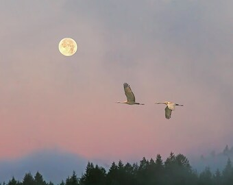 Wall Art, Home Decor, Moon Prints, Nature Prints, Sunrise, Bird Print, Dawn, Cranes, Zen Art, Full Moon, Flying Birds, Wildlife Photography