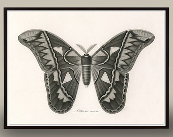 Black and White Moth Art, antique butterfly art, Vintage Black and White Butterfly Print, victorian insect, Vintage Insect, Victorian