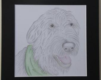Irish Wolfhound Original Coloured Pencil Drawing - 8x8 inch mounted