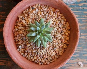 3 pounds SALMON color potting GRAVEL for all succulent succulents plants of gravel