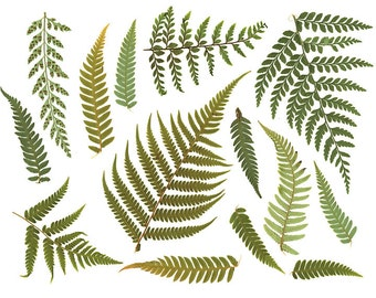 """Clipart """"FERN LEAF"""" Digital Resource. Digital Download. Print Ready File. High Resolution 600 dpi Scan of Real Fern Leaves. Nature. Textures"""