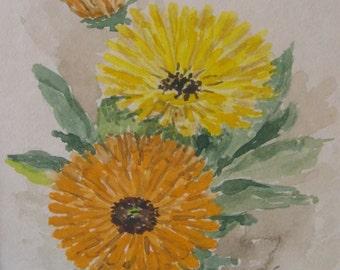 Marigolds Original Vintage California Botanical Watercolor by woman artist Edith Haynes Hobart Gallery Eureka Ca. circa 1950's.