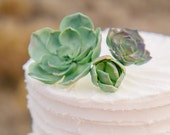Sugar Succulents. Toppers for Cakes or Cupcakes. Wedding & Bridal Shower Sugar Work. Custom Keepsake Toppers.