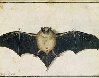 Albrecht Durer: Bat. Fine Art Print/Poster. (003641)