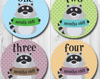 Monthly Baby Stickers, Raccoon, Photo Stickers Months 1-12, Raccoon Stickers, Baby Month Stickers, Milestones, Trendy Stickers