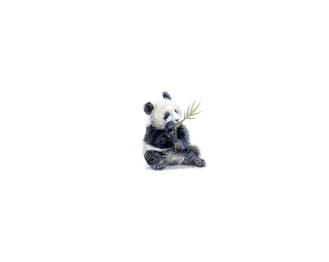 """Print of miniature painting of a Panda Bear. 1 1/4"""" x 1 1/4"""" print of original Panda Bear painting on 5"""" square german etching paper"""
