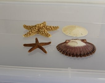 SALE Two Starfish, One Sand Dollar, And One Have no Idea What The Name is?  However, it is Beautiful, They All Are Colorful, Jewelry Making,