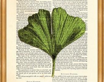 Wonderful Ginkgo Leaf Dictionary art print, book print 8 x 10 inches