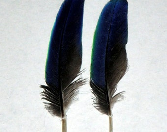 Parrot Feathers,Eclectus,Bird Feathers,pair(2 feathers)Exotic,Blue/Black/Green,for Crafts/Art/Scrap-Booking,Jewelry,Cruelty Free