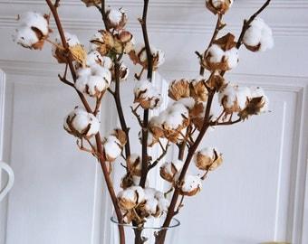 2 X Organic dried cotton stems   2 Cotton branches   Cotton ball stalks l arrangement   natural dried plant   natural wedding decor
