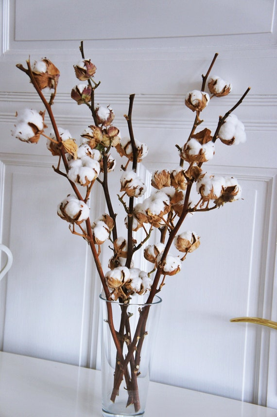 2 X Organic Dried Cotton Stems 2 Cotton Branches