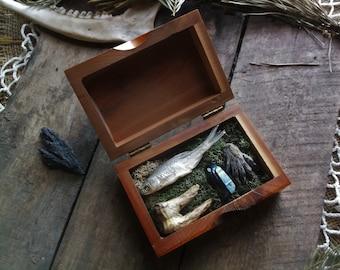 Curiosity box - Oddities - Taxidermy