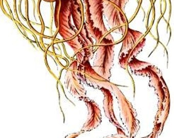 Ernst Haeckel artwork Jellyfish poster Digital vintage art Printable poster card Download supplies scrapbooking decoupage Ihappywhenyouhappy