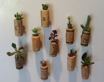 Cork succulent magnets (3 pack)