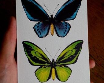 Ornithoptera priamus - Greetings card