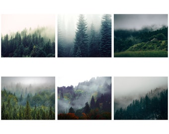 Forest Photo Set - Forest Photo - Forest Prints - Set of 6 Photos - Digital Photo Set - Set of Six - Digital Photo - Digital Download - Sale