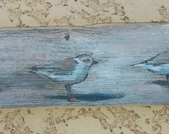 Shore birds on driftwood