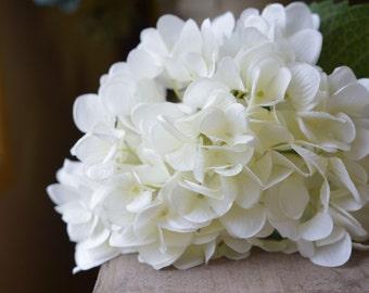 Splendid Hydrangea in white -ITEM023
