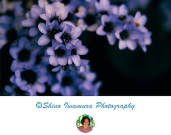 Flower Purple Photography, Nature Wall Art Photo, Blossom Fine Art Print Printable